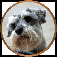 Max Cooney - Distillery Dog